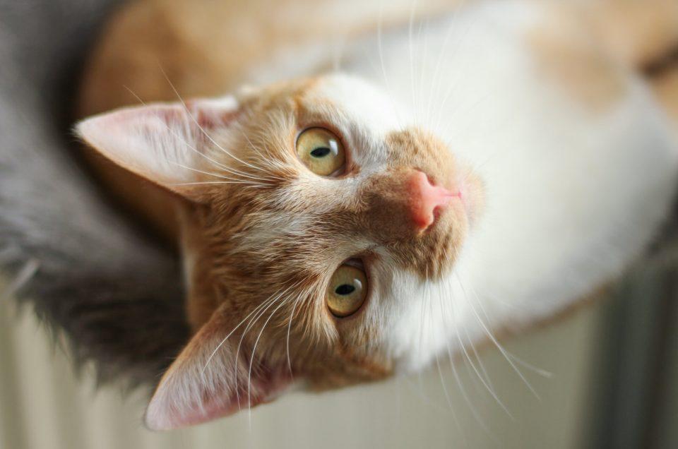 15 tips voor mooie kattenfoto's