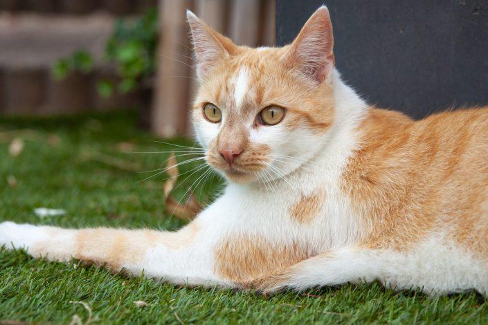 katten fotoshoot, thuis, amsterdam