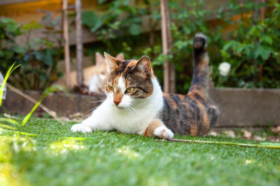 Katten in actie in de tuin