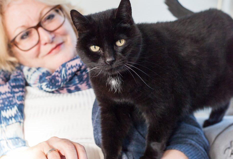 Katten fotoshoot met Bobby