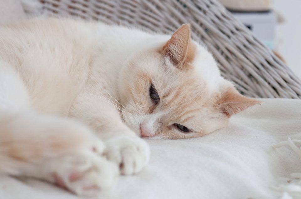 Een fotoshoot met kat Karel