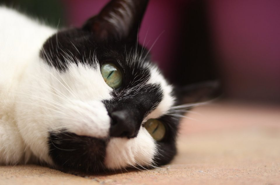 Katten fotoshoot met Jip
