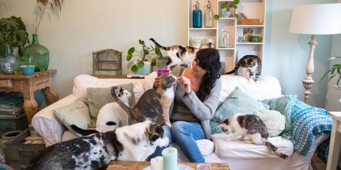 professionele katten foto thuis