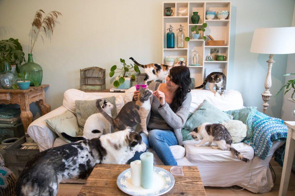 Foto's van vijf katten en twee honden