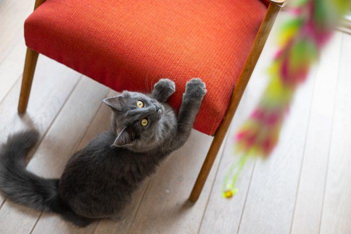 fotoshoot, kat