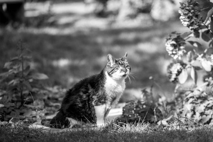 kat, fotoshoot, amsterdam