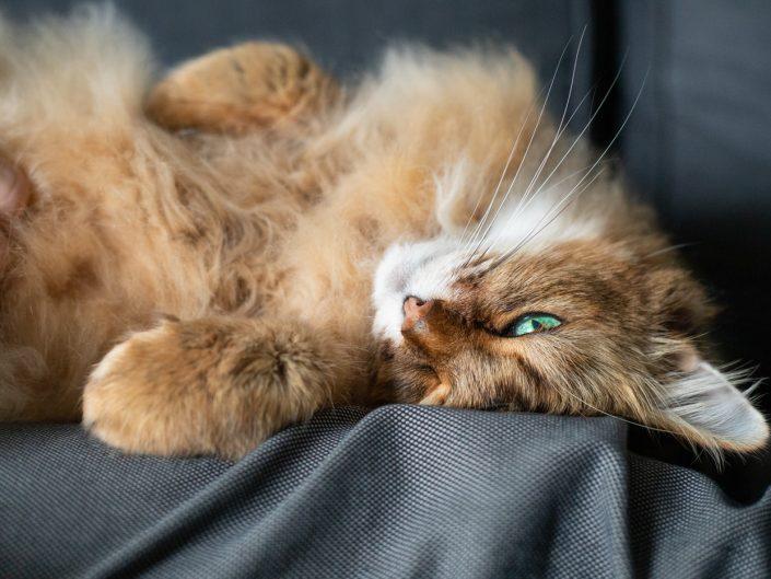 katten, fotograaf