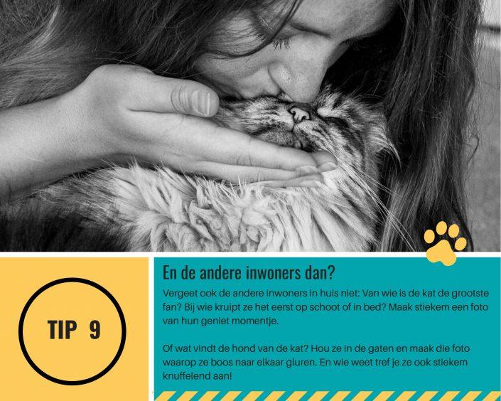 tips goede kattenfoto maken