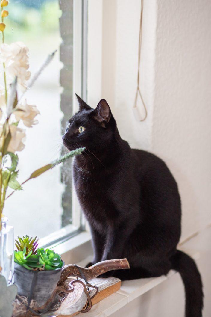 professionele foto's van je kat thuis amsterdam