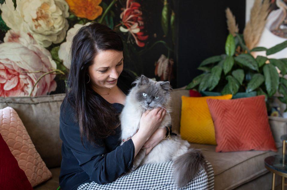 De perfecte kat op de foto